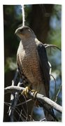 Sharp Shinned Hawk Bath Towel