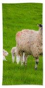 Sheep And Lambs Bath Towel