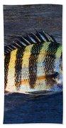 Sheepshead Fish Bath Towel