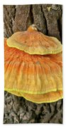 Shelf Fungus - Basidiomycota Bath Towel