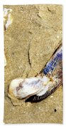 Shells On The Beach Of Jekyll Bath Towel