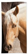 Shy Horse Bath Towel