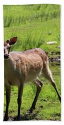 Sika Deer Water Hole Omagh Bath Towel
