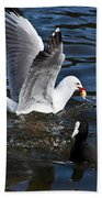 Silver Gull And Australian Coot Bath Towel
