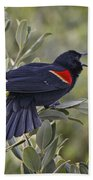 Sing Me A Song, Red-winged Blackbird Bath Towel