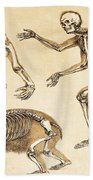 Skeletons Of Man, Ape, Bear, 1860 Bath Towel