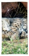 Sleeping Bobcat Hand Towel