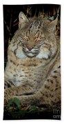 Sleepy Bobcat Bath Towel