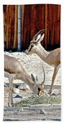 Slender-horned Gazelles In Living Desert Zoo And Gardens In Palm Desert-california Bath Towel