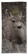 Small Fawn In Tombstone Hand Towel