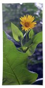 Small Yellow Flower And Green Big Leaves In The Sun Light. Bath Towel