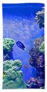 Smaller Fish In Monterey Aquarium-california  Bath Towel