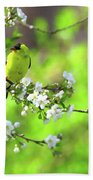 Smelling The Cherry Blossom Male  American Goldfinch Bath Towel