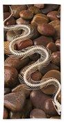Snake Skeleton  Bath Towel