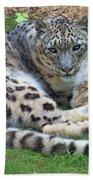 Snow Leopard, Doue-la-fontaine Zoo, Loire, France Bath Towel