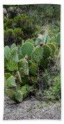 Sonoran Cactus Bath Towel
