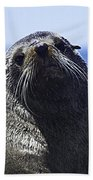 Southern Fur Seal Bath Towel