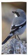 Southern Grey Shrike-- . Bath Towel