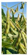 Soybeans In Autumn Bath Towel