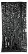 Spanish Moss Of The Tree Bath Towel