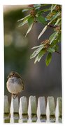 Sparrow In Colonial Williamsburg Bath Towel