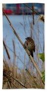 Sparrow On The Cattails Bath Towel