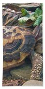 Spider Tortoise       Zoo    Indiana Bath Towel