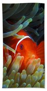 Spinecheek Anemonefish, Great Barrier Reef Bath Towel
