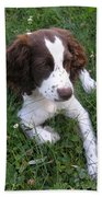Spinger Spaniel Pup Bath Towel
