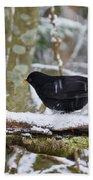 Splash. Eurasian Blackbird Bath Towel