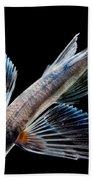 Spotfin Flyingfish Bath Towel