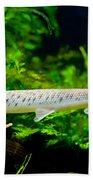Spotted Gar Aquarium Fishes Pair Bath Towel