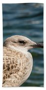 Spotted Seagull Hand Towel