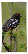 Spotted Towhee Bath Towel