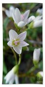 Spring Beauties Hand Towel