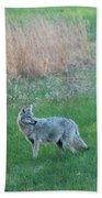 Spring Coyote  Bath Towel