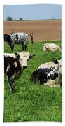 Spring Day With Cows On An Amish Cattle Farm Bath Towel