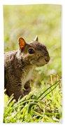 Spring Squirrel Bath Towel