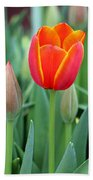 Spring Tulips 211 Bath Towel