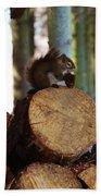 Squirrel Eating Pinecones Bath Towel