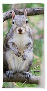 Squirrel Looking At Photographer And Waiting To Be Fed Bath Towel