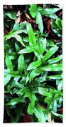 Staghorn Fern With Dead Leaves Bath Towel