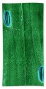 Stomata In A Green Onion Leaf, Esem Bath Towel