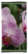 Striped Orchids With Border Bath Towel