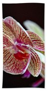 Study Of An Orchid 3 Bath Towel