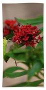 Sulphur Butterfly On Red Flower Bath Towel
