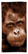 Sumatran Orangutan Female Bath Towel