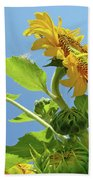 Sun Flower Artwork Sunflower 5 Giclee Art Prints Baslee Troutman Bath Towel