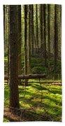 Sun Rays In Forest Bath Towel