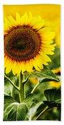 Sunflower Crops On A Farm In South Dakota Bath Towel